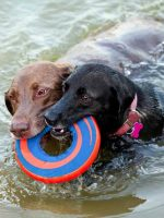 Canine Cove Swim